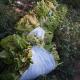 Cosecha 2016 de TABACO 100% SIN AGROTOXICOS… en proceso a la AGRICULTURA REGENERATIVA